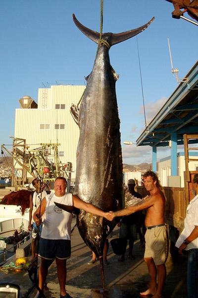 Weltrekord: Blue Marlin 563 kg, gefangen vor Sao Vicente.