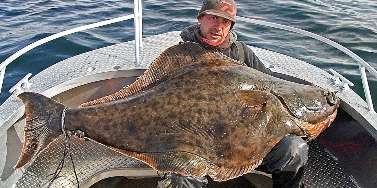 Am Saltstraumen gefangen: 1,80 m Butt