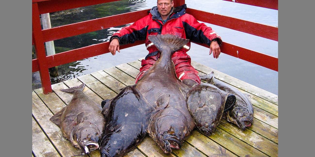 Der größte Heilbutt wog 60 kg