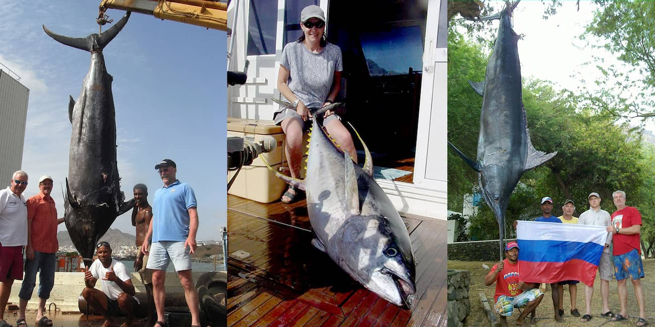 Marlin - 395 kg / Thunfisch 110 kg / Marlin 554 kg