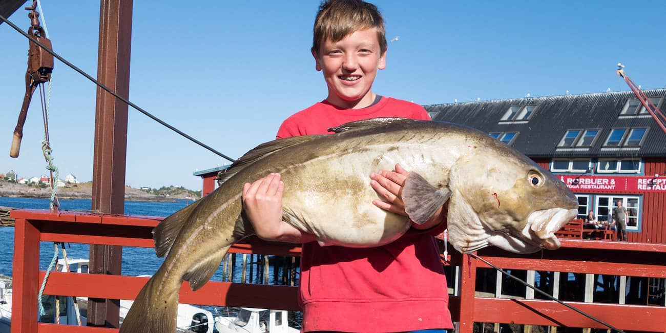 Small man with great strength: a 20 kg cod has to be lifted